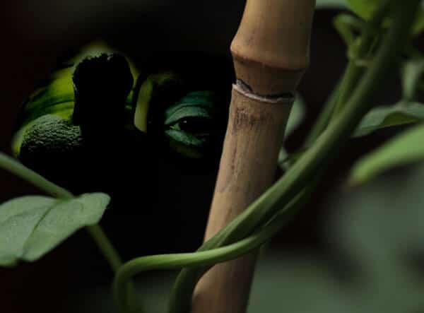 A l'affût dans la jungle du Web | Photo et montage © David Noir